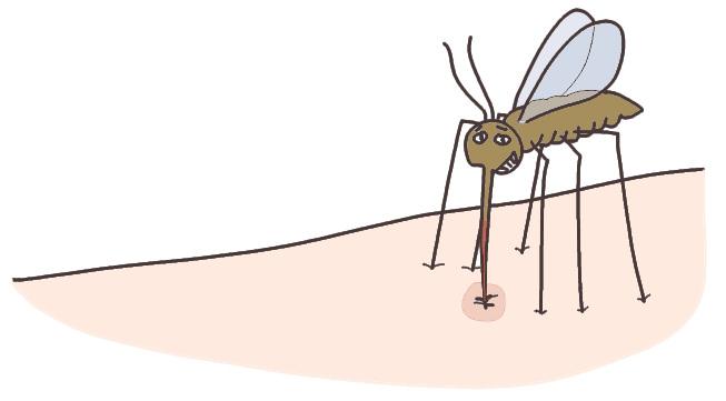 moustique-bambou