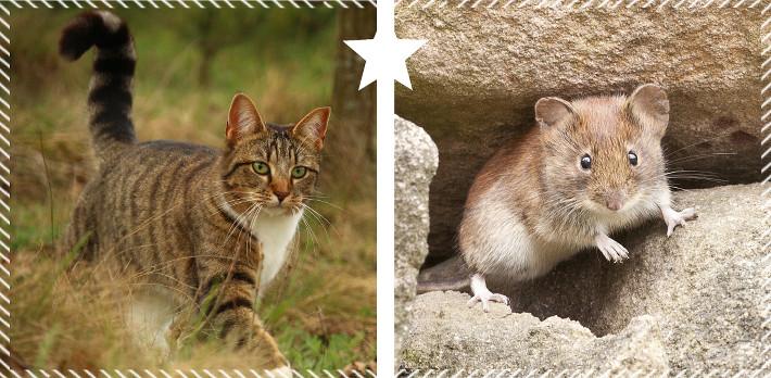Le chat mange la souris.