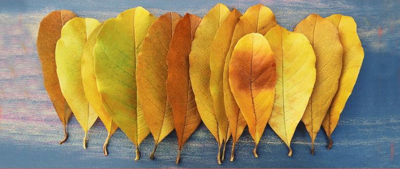 valse de l'automne