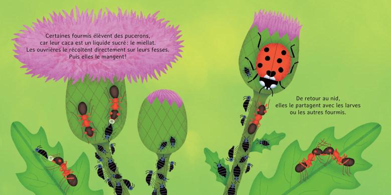 les p'tites fourmis - la vie dans la fourmilière
