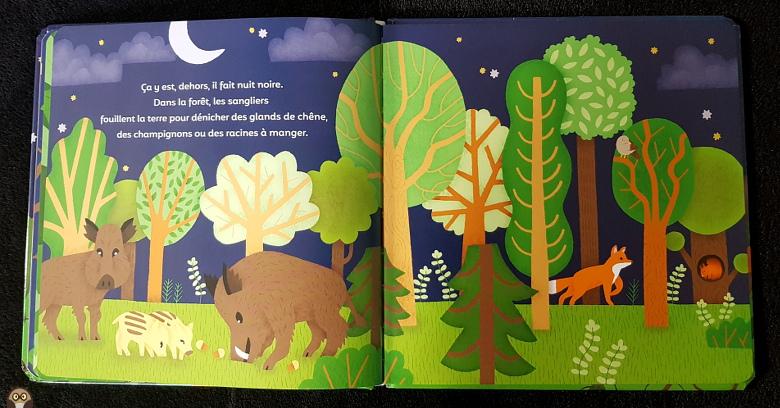 Dans la forêt, les sangliers fouillent la terre pour dénicher des glands, des champignons ou des racines. - La p'tite nuit
