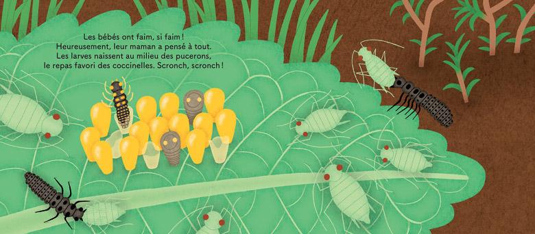 Les p'tites coccinelles naissent au milieu des pucerons.
