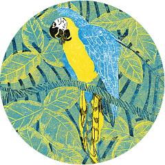 perroquet - le carnaval des animaux sud-américains