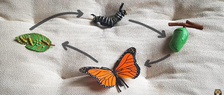 chenilles et papillons : le cycle de vie du papillon monarque