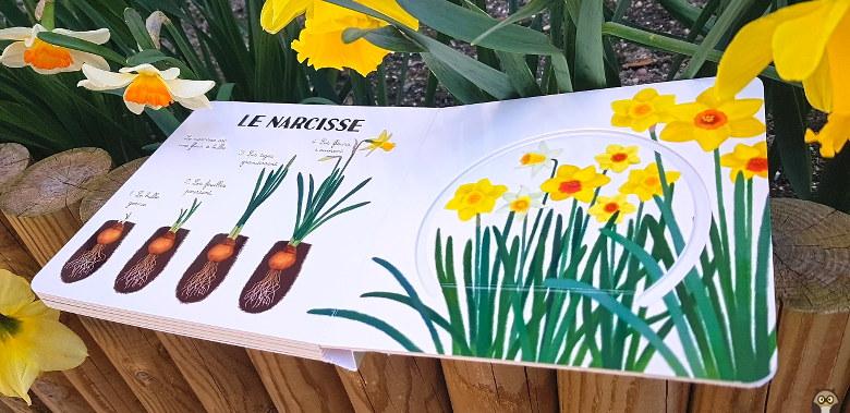 les fleurs de mon jardin : le narcisse