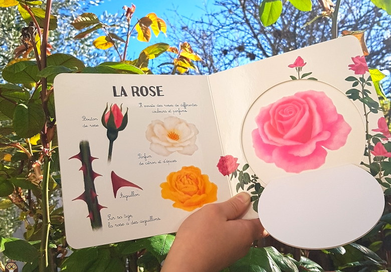les fleurs de mon jardin : la rose
