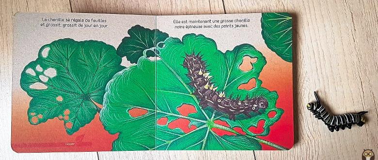 Petit Papillon - la chenille