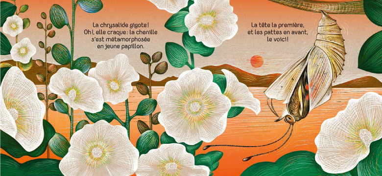 Petit Papillon - la chrysalide