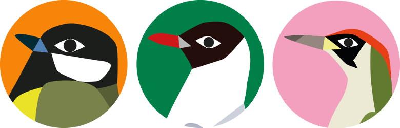 Je suis un oiseau de la ville : la mésange charbonnière, la mouette rieuse et le pivert.